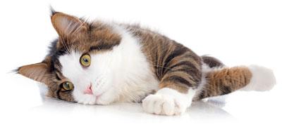 Cat-Helper